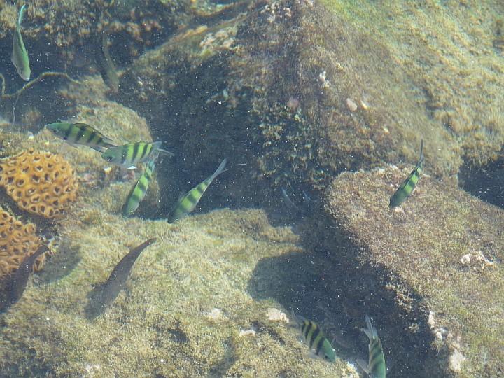 Kein Aquarium, sondern ein Blick in das Hafenbecken