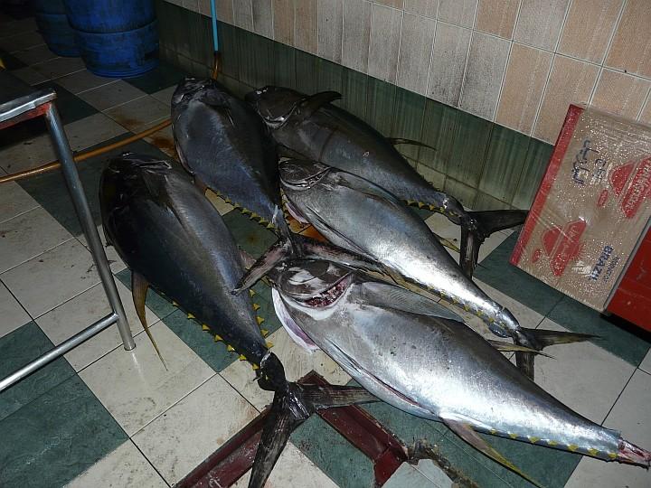 Gelbflossen-Thunfische in der Markthalle